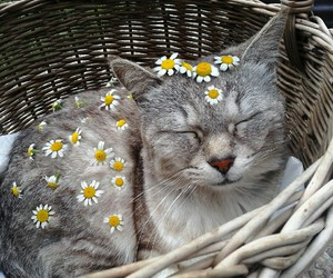aesthetic, cat, and cute image