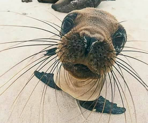 animal, nature, and seal image