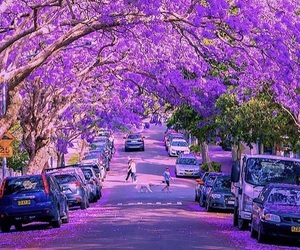 purple, nature, and photography image