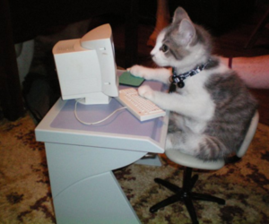 cat, computer, and kitten image