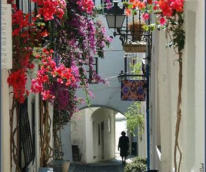 street, flowers, and spain image