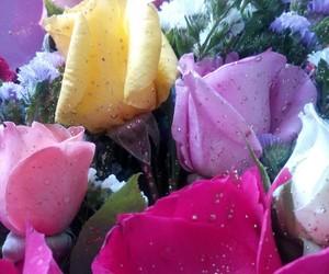 blossom, flowerslovers, and flowersofinstagram image
