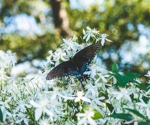 butterfly, nature, and macro photo image