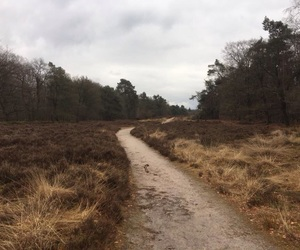 nature, the netherlands, and walking image