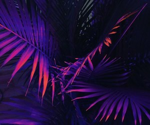 purple, plants, and neon image