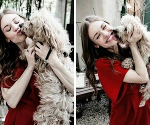 dog, holland roden, and cute image