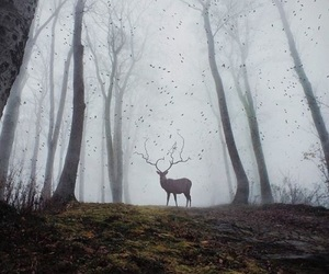 aesthetic, books, and deer image