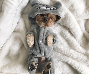 adorable, bed, and bedtime image