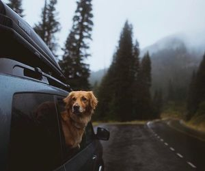 dog, animal, and travel image