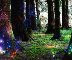 forest, Fairies, and lights image