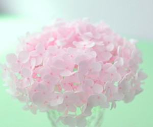 flowers, beautiful, and wallpaper image