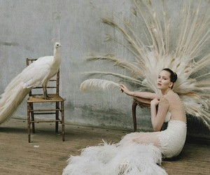 Jennifer Lawrence, white, and peacock image
