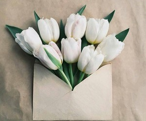beautiful, flores, and gift image