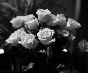 black n white, dark, and flowers image