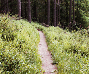 ferns, hiking, and path image