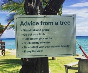 tree, advice, and nature image