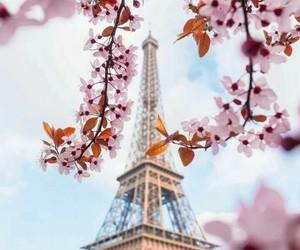 flores, torre ifel, and parís image