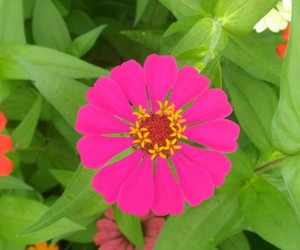 flower, pink, and plant image
