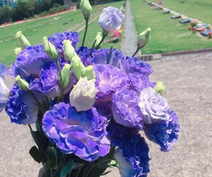 flower, purple, and pretty image