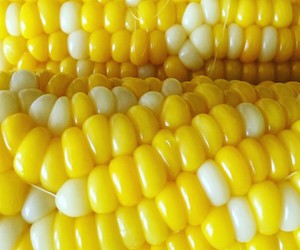 corn, food, and yellow image