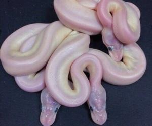 snake, pink, and grunge image