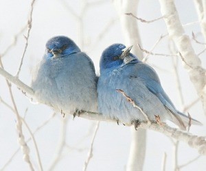 bird, blue, and winter image