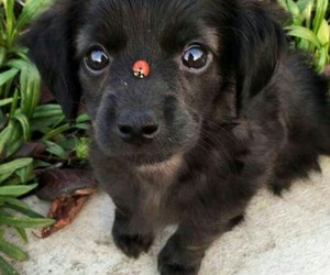 cool, ladybug, and puppy image