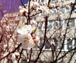 beautiful, flower, and spring image