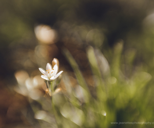 fine art photography, nature, and macro photo image