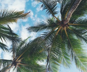 Carribean, palms, and paradise image