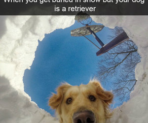 dog, funny, and humor image