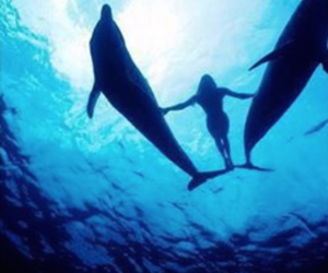 dive, dolphins, and sea image