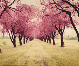 beautiful, perspective, and pink image