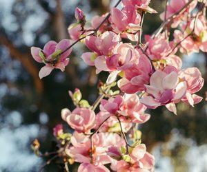 april, may, and seasons image