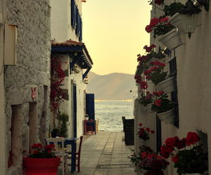 flowers, sea, and Greece image
