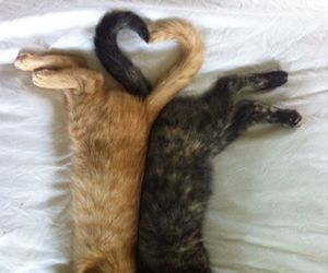 cat, animal, and heart image