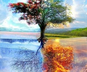 spring, summer, and tree image