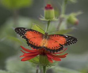 beautiful, butterflies, and nature image