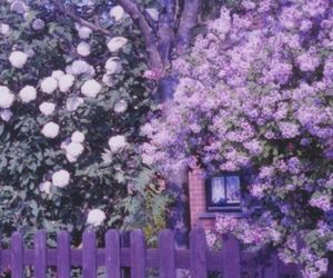 lavender, picket fence, and ladysuzanne image
