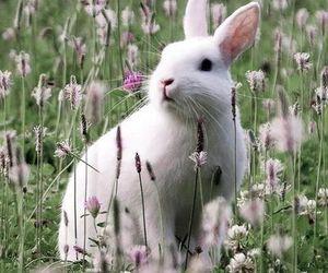 bunny and ladysuzanne image