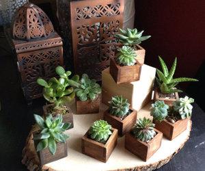plants, succulents, and plant pots image