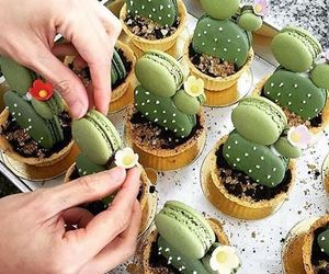 cactus, food, and macaroons image