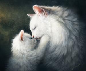 cat, white, and white cat image
