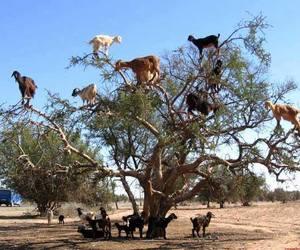 goat, tree, and animals image