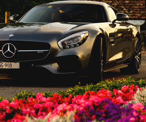 flowers, car, and driving image