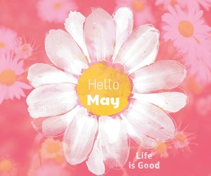 flower, may, and hello may image