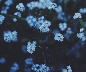 Image by ᴀ ʀ ᴀ ʀ ᴀ ɴ