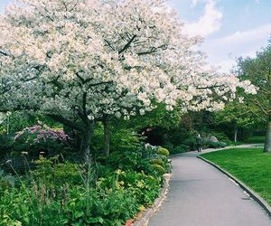 flowers, garden, and london image
