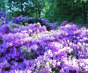 color, flowers, and lilac image