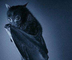 animal, black, and bat image